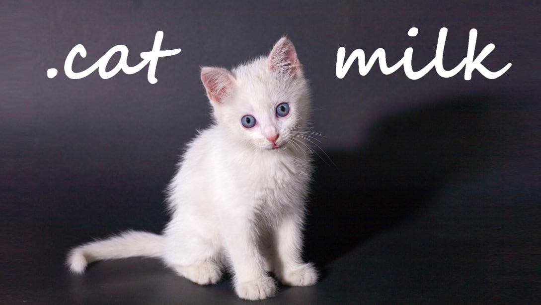 牛奶猫(.cat Milk)插图4